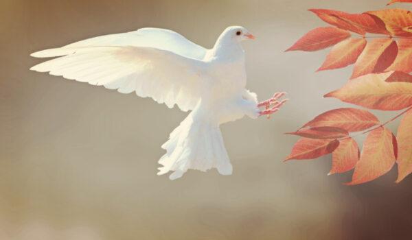 Jésus lui dit: Je suis le chemin, la vérité, et la vie. Nul ne vient au Père que par moi.